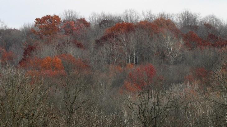 Oak trees in late fall