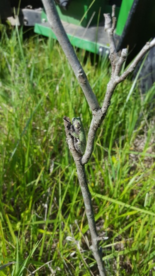 camo-tree-frog-2