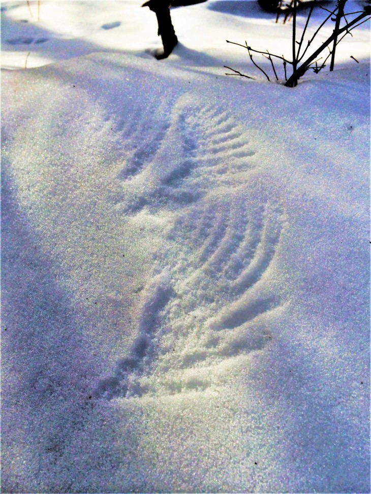 snow-angels-2