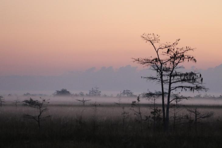 sunrise-over-everglades