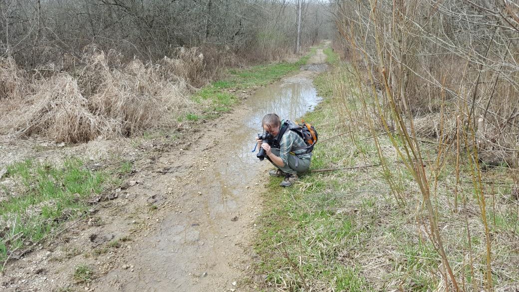 Marshy path